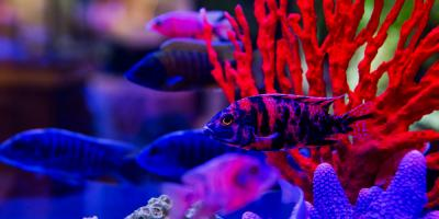 5 Cool Tools for Cleaning a Dirty Reef Tank, Moraine, Ohio