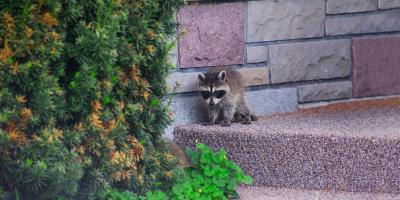 3 Ways Critters Can Break Into Your Home, Concord, North Carolina