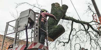 When to Call Emergency Tree Services, Crescent, Wisconsin