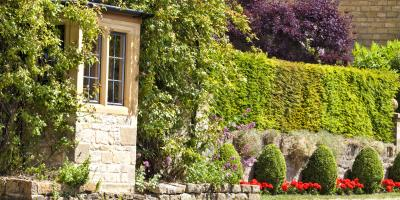 Top 3 Shrubs to Use at Home for Privacy, Crescent, Wisconsin