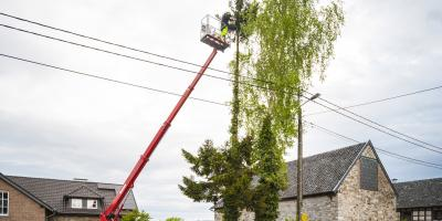 A Guide to Tree Services: What Is Cabling?, Crescent, Wisconsin