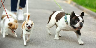 5 Reasons to Bring Your Pet to a Boarding Service, Rosenberg-Richmond, Texas