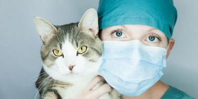 When Should a Veterinary Service Spay or Neuter Your Pet?, Rosenberg-Richmond, Texas