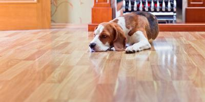 How to Pick the Right Sheen for Your Hardwood Floors, Providence, Rhode Island