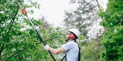 A Homeowners' Guide to Tree Maintenance, Marshan, Minnesota