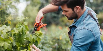 3 Essential Gardening Tips for Late Winter, Robertsdale, Alabama