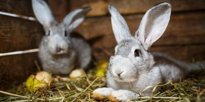 5 Ways to Keep Your Rabbits Cool in Warmer Weather , Robertsdale, Alabama