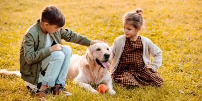 3 Ways to Help Your Pet Overcome Visitor Anxiety During the Holidays, Newport-Fort Thomas, Kentucky