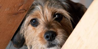 Dog Boarding Experts Offer 4 Tips to Help Your Pets Get Through a Storm, Newport-Fort Thomas, Kentucky