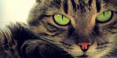 Cat Grooming Experts Share 5 Unique Feline Facts, Newport-Fort Thomas, Kentucky