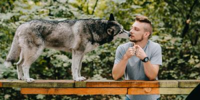 4 Tips for Designing a Great Dog Park, Rochester, New York