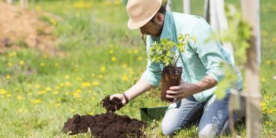 A Basic Guide to Tree Planting & Maintenance, Macedon, New York