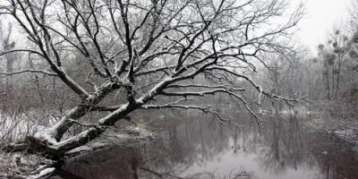 4 Tips for Avoiding Tree Damage This Winter, Henrietta, New York