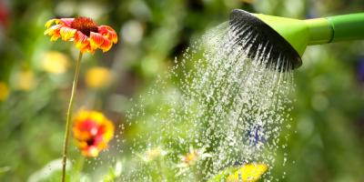 Water Purification Experts Discuss 3 Conservation Tips for Your Garden, Henrietta, New York