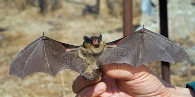 3 Bat Infestation Removal Tips From a Rodent Control Service, Statesboro, Georgia