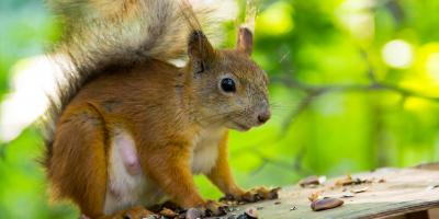 Protect Your Roof During Squirrel Awareness Month, Omaha, Nebraska