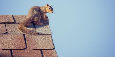 3 Ways Squirrels Are Bad for Roofing, Jenks, Oklahoma
