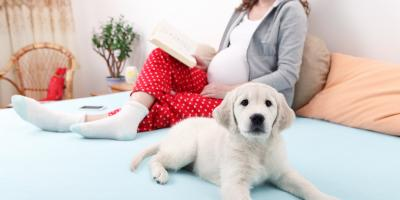 4 Do's & Don'ts of Readying Your Dog for a New Baby, Russellville, Arkansas