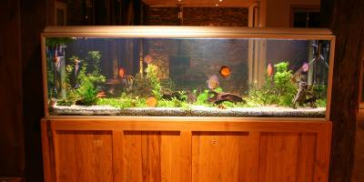 A Guide to Safely Moving Your Aquarium, Puyallup, Washington