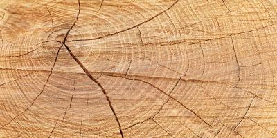 3 Reasons to Hire a Tree Service for Stump Grinding, St. Louis, Missouri
