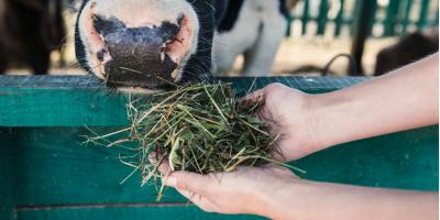 3 Reasons to Select High-Quality Hay for Animal Feed, St. Peters, Missouri