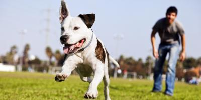 Professional Movers Share Pet Care Tips for the Big Move, Foley, Alabama