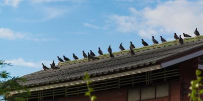 How Animals Harm Your Roof, San Marcos, Texas