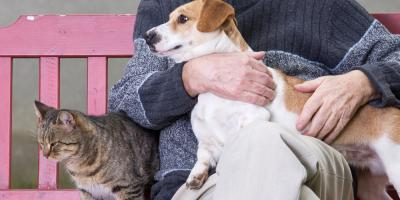 5 Pet Care Tips for Your Senior Cat or Dog, San Marcos, Texas