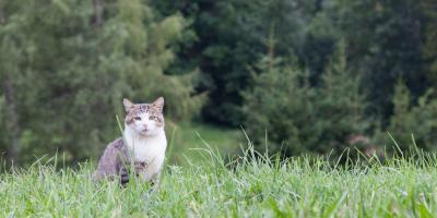 What Are the Health Risks Associated With Letting Cats Outdoors?, Sanford, North Carolina