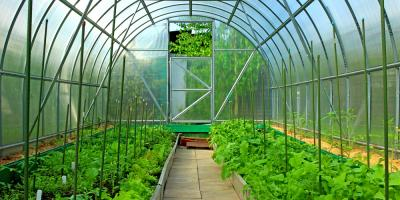The Ultimate Guide to Shopping for Greenhouses, Lexington, South Carolina