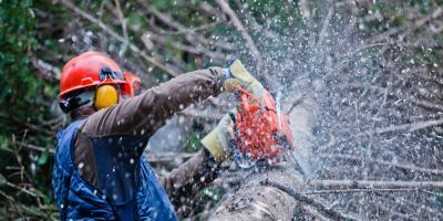 How to Prepare for Tree Removal, North Royalton, Ohio