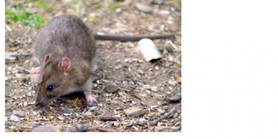 Pest & Rodent Control Tips & Tricks From Critter Control, Lexington-Fayette Northeast, Kentucky