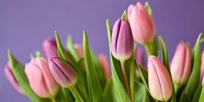 Kreations by Karen Reveals 4 Tips to Keeping Flower Arrangements Fresh, Lexington-Fayette, Kentucky