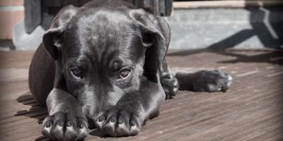 A Pet Hospital Explains 3 Common Allergy Symptoms, Honolulu, Hawaii