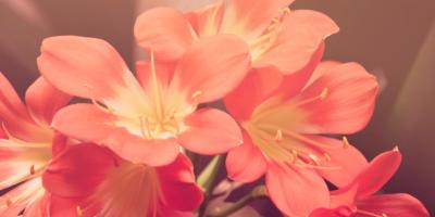 3 Tips for Choosing the Right Flower Arrangement, Branford Center, Connecticut