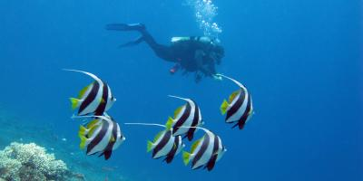 A Brief History of Scuba Diving, Honolulu, Hawaii