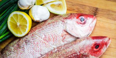 The Differences Between a Snapper & Grouper, Bon Secour, Alabama