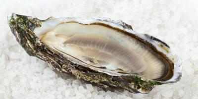 What Are the Health Benefits of Eating Seafood?, Bon Secour, Alabama
