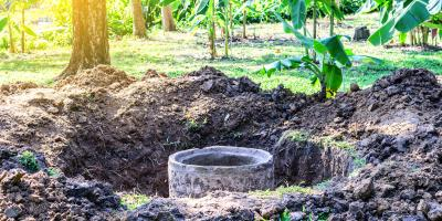 What to Know About Tree Roots in Septic Tanks, O, Nebraska