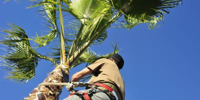 3 Benefits of Tree Trimming, Honolulu, Hawaii