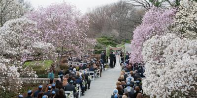 5 Engagement Session Locations in NYC with Cherry Blossoms, Brooklyn, New York