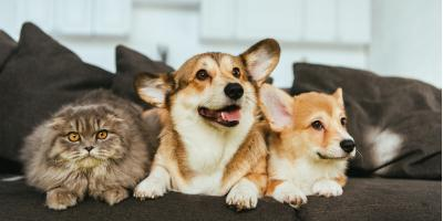 Should the Air Conditioner Stay on for Pets?, Brookhaven, New York