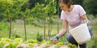 The Do's & Don'ts of Mulching, St. Louis, Missouri