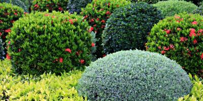 Top 3 Tips for Shrub Care in New Mexico, North Hobbs, New Mexico
