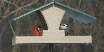 4 Different Types of Seeds for Wild Birds, Lincoln, Nebraska