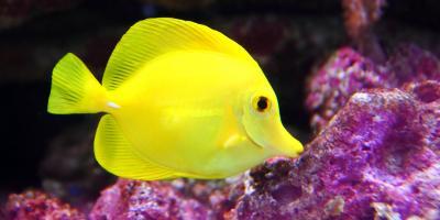 5 Tropical Fish Seen While Snorkeling, Ewa, Hawaii
