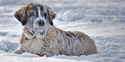 La Crosse Pet Supplies Store Reminds Customers To Bring Pets Inside During Winter, La Crosse, Wisconsin