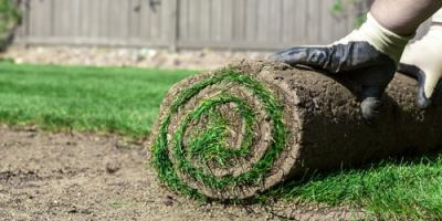 Seed Vs. Sod: Which Is Better for Your Lawn?, Wahiawa, Hawaii