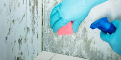 Understanding Mold Removal: Where Is It Hiding in Your Home?, Pagosa Springs, Colorado