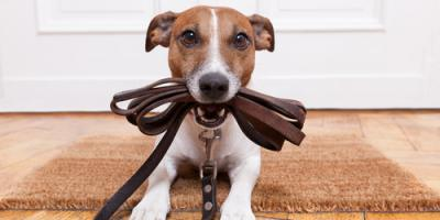 Dog Training Specialists Share 3 Activities to Enjoy With Canine Companions This Spring, Defiance, Missouri